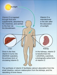 Vitamin D Synthesis in Humans